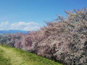 Les Sakura à Matsumoto – Partie 2 : Le Mont Koboyama