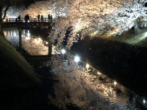 樱花的季节,来了