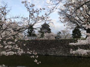 ชมดอกซากุระที่ปราสาทมัตสึโมโต้ช่วงก่อนพระอาทิตย์ตกดิน