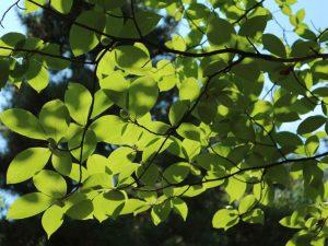 岡宮神社の森とまちなかの初夏の木々